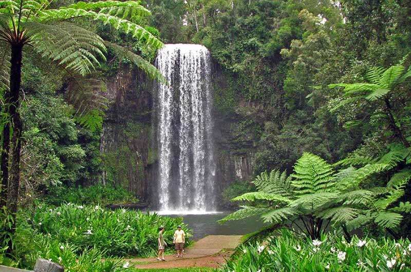 Daintree Waterfalls